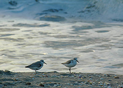 Sandpiper Photograph - Sandpipers by Juergen Roth