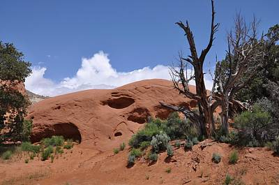 Photograph - Sandstone Mound With Trees by Frank Madia