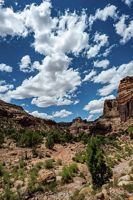 Photograph - Sandstone Trails by TM Schultze