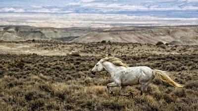 Photograph - Sandwash Stallion Galloping by Joan Davis