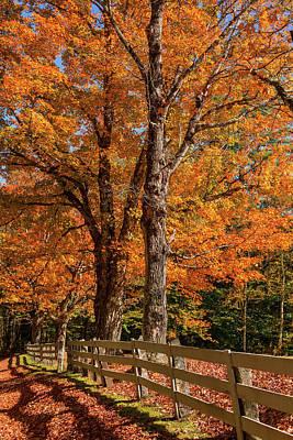 Photograph - Sandwich Autumn by Chris Whiton