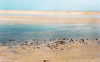 Photograph - Sandy Atlantic Shore by Muyiwa OSIFUYE