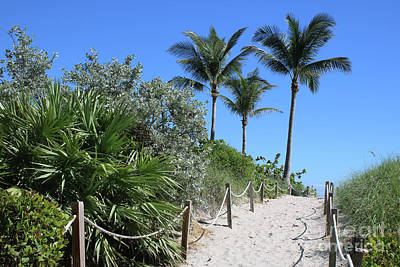Photograph - Sandy Beach Path With Rope Fence And Palms by Carol Groenen