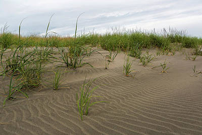 Science Collection - Sandy Beach with Grass at Washington Coast by Jit Lim
