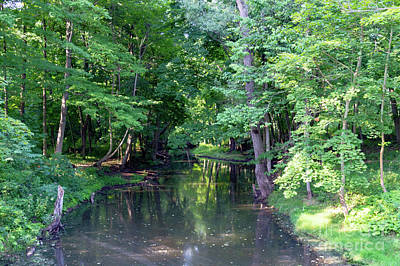 Photograph - Sandy Creek by William Norton