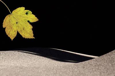 Photograph - Sandy Leaf by Michael Mogensen