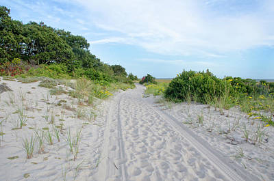 Photograph - Sandy Neck Marsh Trail by Donna Doherty
