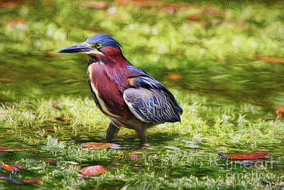 Painting - Sanibel Green Heron by Deborah Benoit
