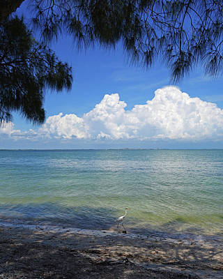 Photograph - Sanibel Island Blue Heron Fort Myers Florida by Toby McGuire
