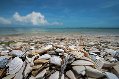 Photograph - Sanibel Island Sea Shell Fort Myers Florida Broken Shells by Toby McGuire