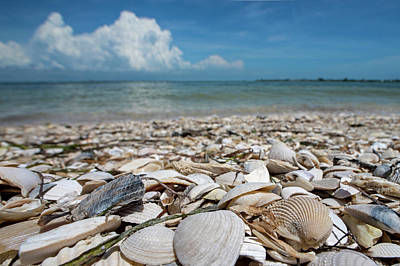 Photograph - Sanibel Island Sea Shell Fort Myers Florida Clouds by Toby McGuire