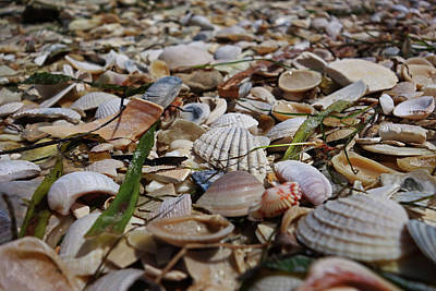 Photograph - Sanibel Island Sea Shell Fort Myers Florida Shells by Toby McGuire