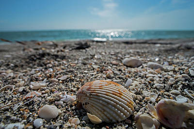 Photograph - Sanibel Island Sea Shell Fort Myers Florida by Toby McGuire