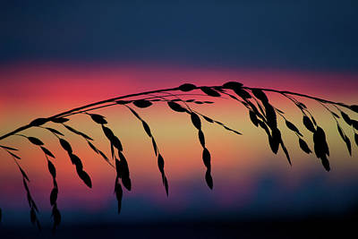 Photograph - Sanibel Sea Oats by Melanie Moraga