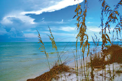 Art Print featuring the photograph Sanibel Sea Oats by Timothy Lowry
