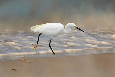 Photograph - Sanibel Snowy by Donna Kennedy