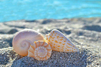Photograph - Sanibel Treasures  by Melanie Moraga