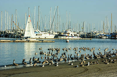 Painting - Santa Barbara California Crowded Marina by Georgia Mizuleva