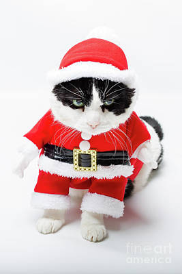 Photograph - Santa Christmas Cat by Benny Marty
