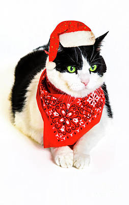 Photograph - Santa Claus Cat by Benny Marty