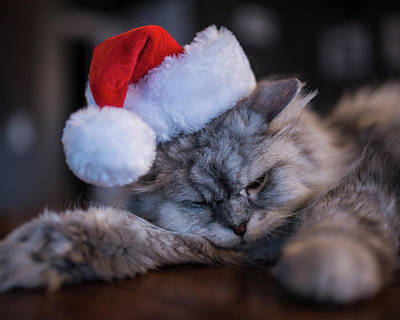 Photograph - Santa Claws by Toby McGuire