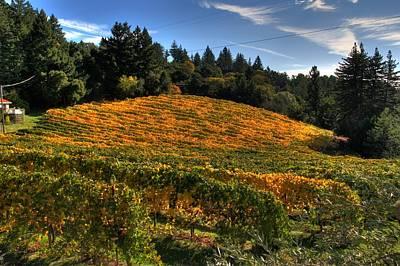 Santa Cruz Mountain Vineyard Original by Doug Shier