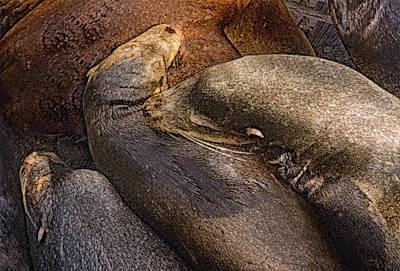 Santa Cruz Sea Lions Art Print