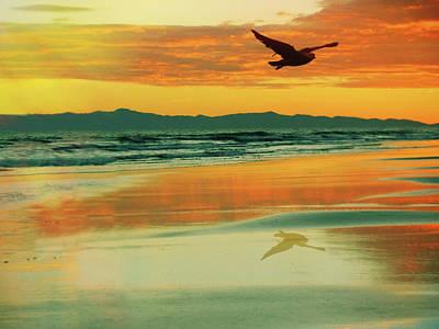 Ocean Sunset Mixed Media - Santa Cruz Seagull by Priscilla Huber