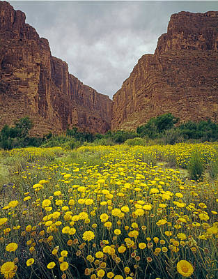 Photograph - 317804-santa Elena Canyon In Bloom  by Ed  Cooper Photography