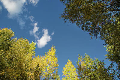 Photograph - Santa Fe Fall Colors by Kunal Mehra