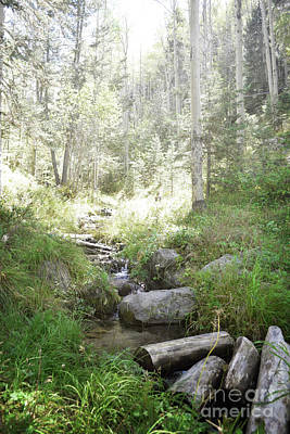 Photograph - Santa Fe Mountain Stream by Andrea Hazel Ihlefeld