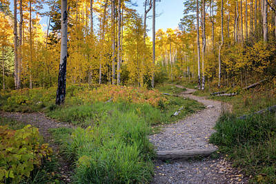 Photograph - Santa Fe National Forest Aspen 1 - New Mexico by Brian Harig
