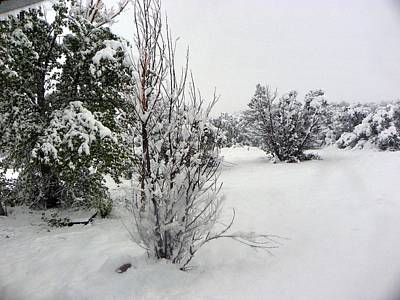 Photograph - Santa Fe Snowstorm 2017 by Joseph Frank Baraba