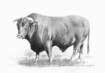 Steer Drawing - Santa Gertrudis Bull by Arline Wagner