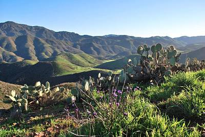 Santa Monica Mountains - Cactus Hillside View Art Print