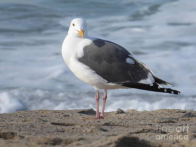 Santa Monica Seagull Art Print