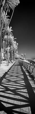 Infra-red Photograph - Santa Monica Shadows And Palms by Sean Davey