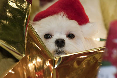 Art Print featuring the photograph Santa Paws by Leslie Leda