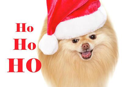 Photograph - Santa Pom Puppy Ho Ho Ho by Kelly Richardson