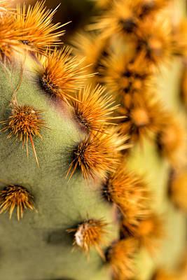Photograph - Santa Rita Prickly Pear by Susan Rissi Tregoning