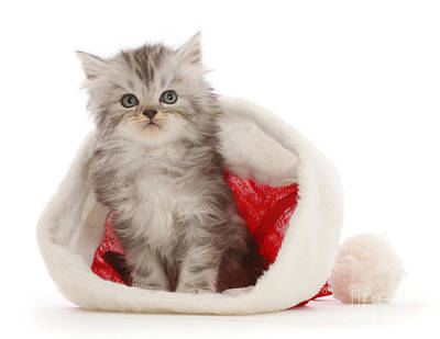 Photograph - Santa Tabby Kit by Warren Photographic