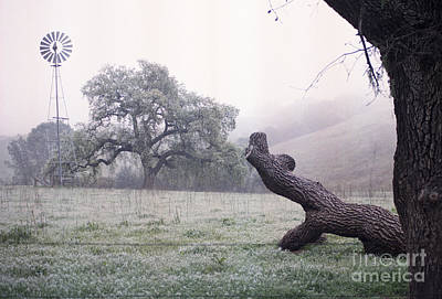 Photograph - Santa Yenez Meadow by Balanced Art