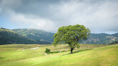 Photograph - Santa Ysabel - Solitary Black Oak by Alexander Kunz