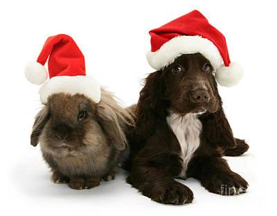 Photograph - Santa's Chocolate Helpers by Warren Photographic
