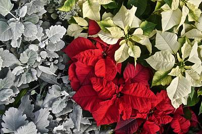 Photograph - Santa's Garden by Photography by Tiwago