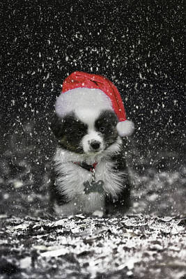 Photograph - Santas Helper Christmas Puppy Art by Jai Johnson