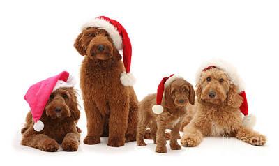 Photograph - Santas Helper Gang by Warren Photographic