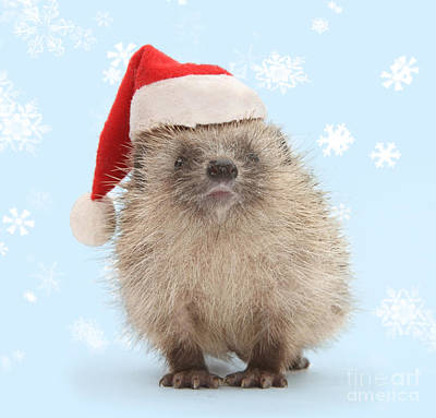 Photograph - Santa's Prickly Pal by Warren Photographic