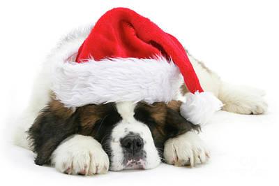 Santa's Snoozing Saint Bernard Art Print