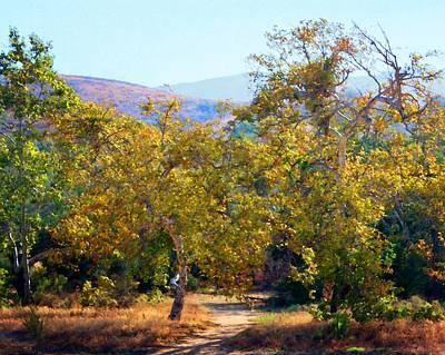 Photograph - Santiago Creek Trail by Timothy Bulone
